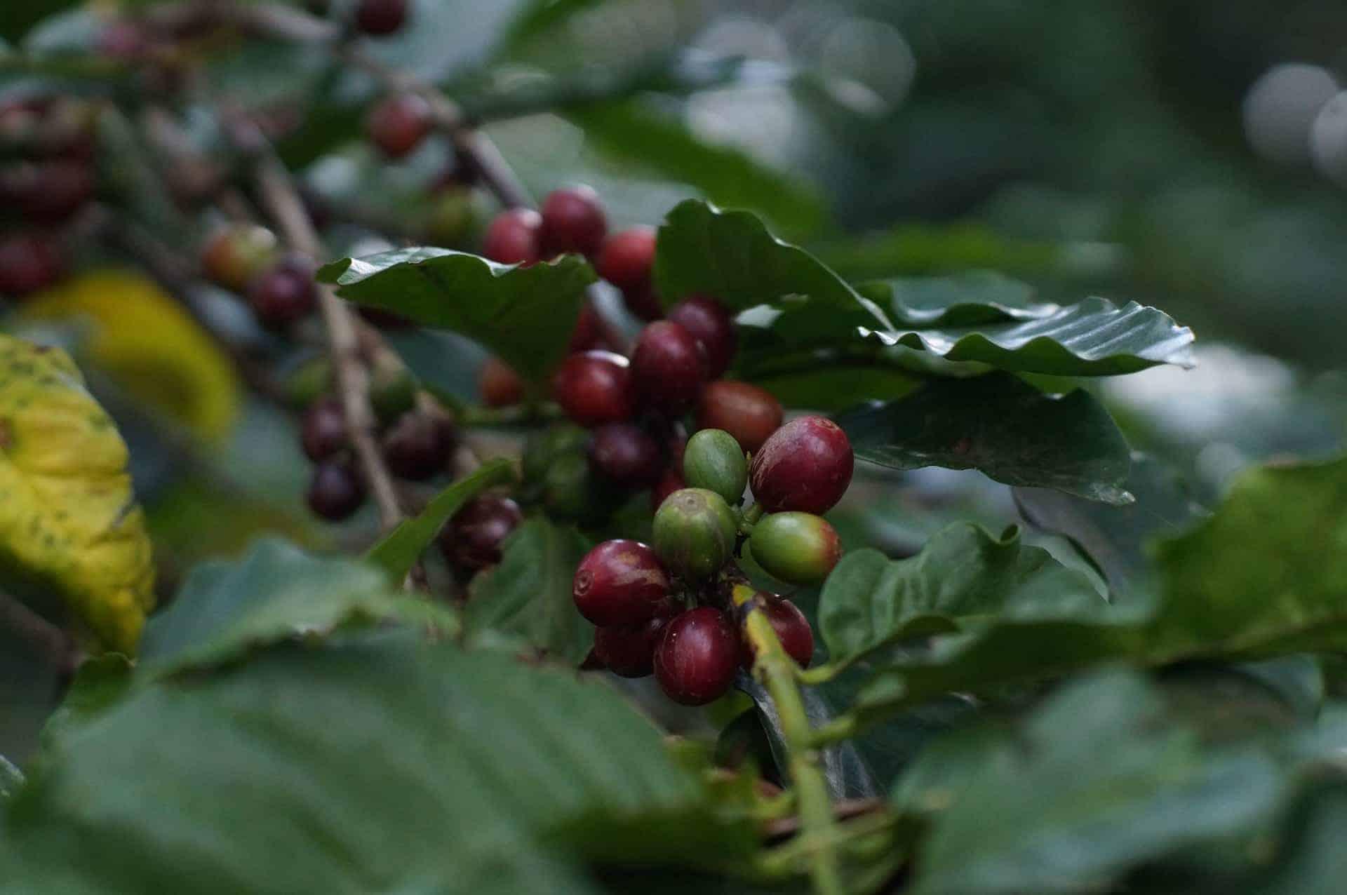 Koffietour in Arusha Tanzania