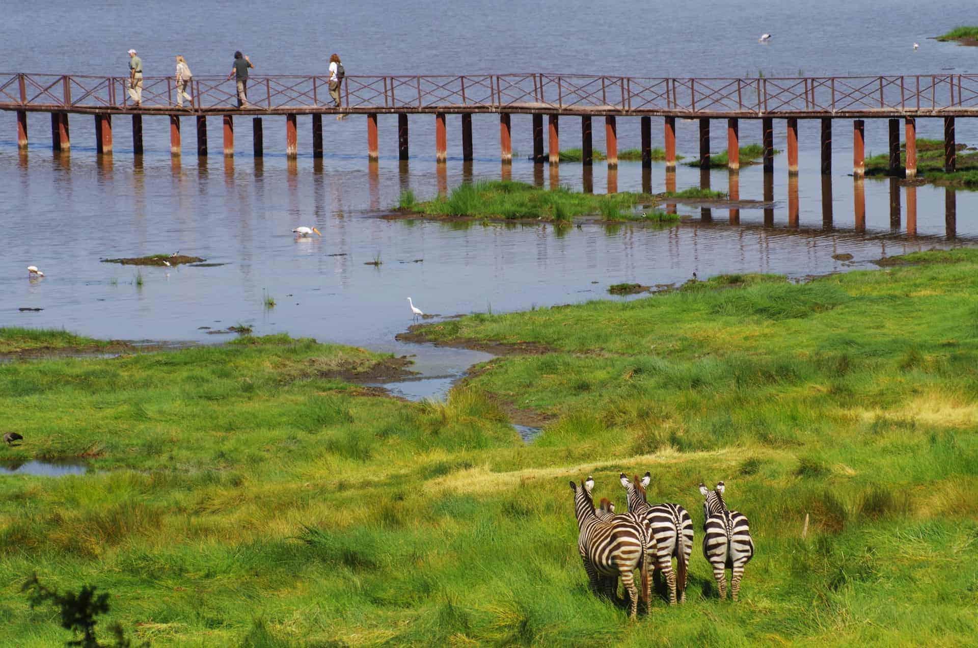 loopbrug Lake Manyara