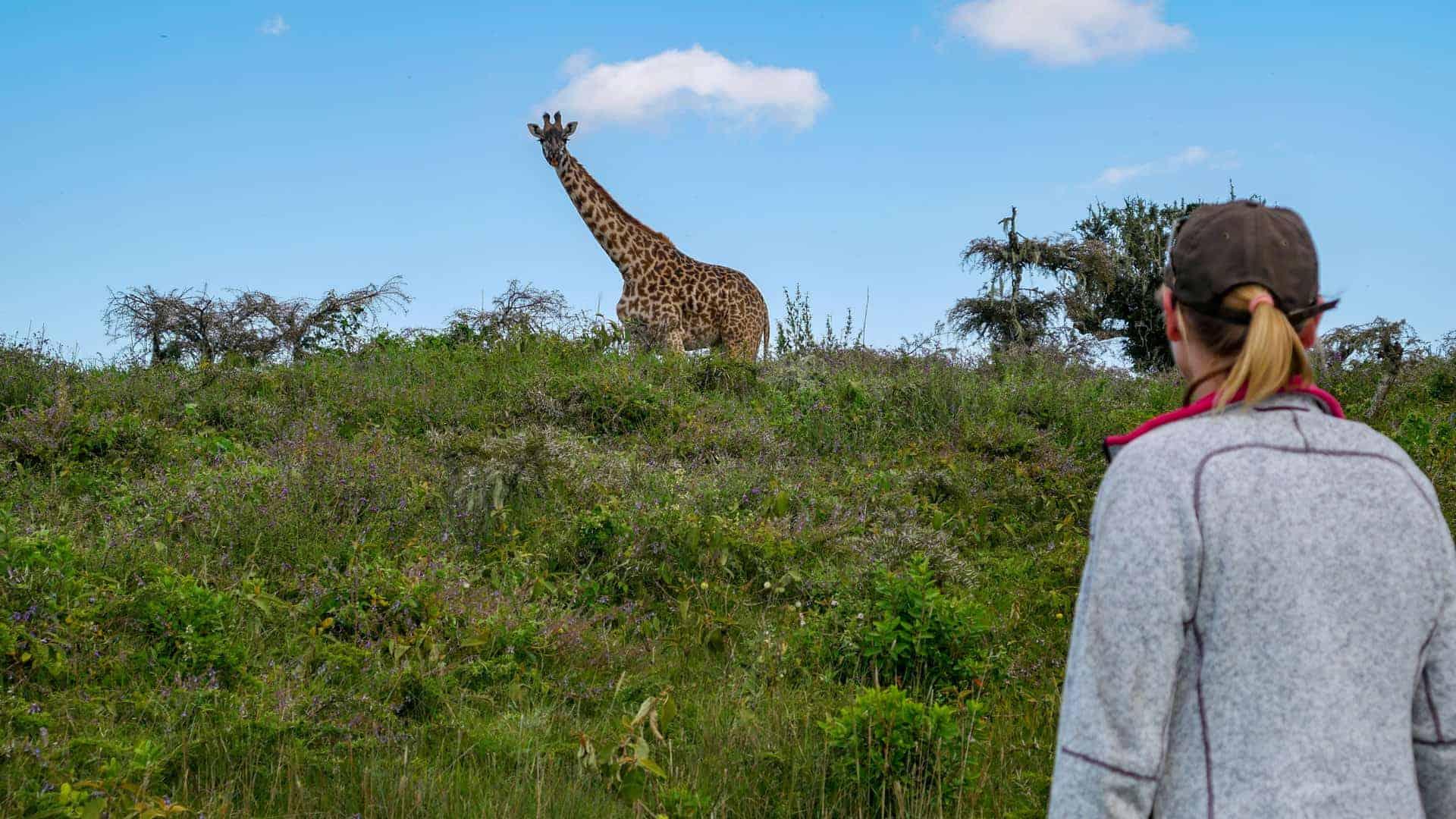 Wandel safari