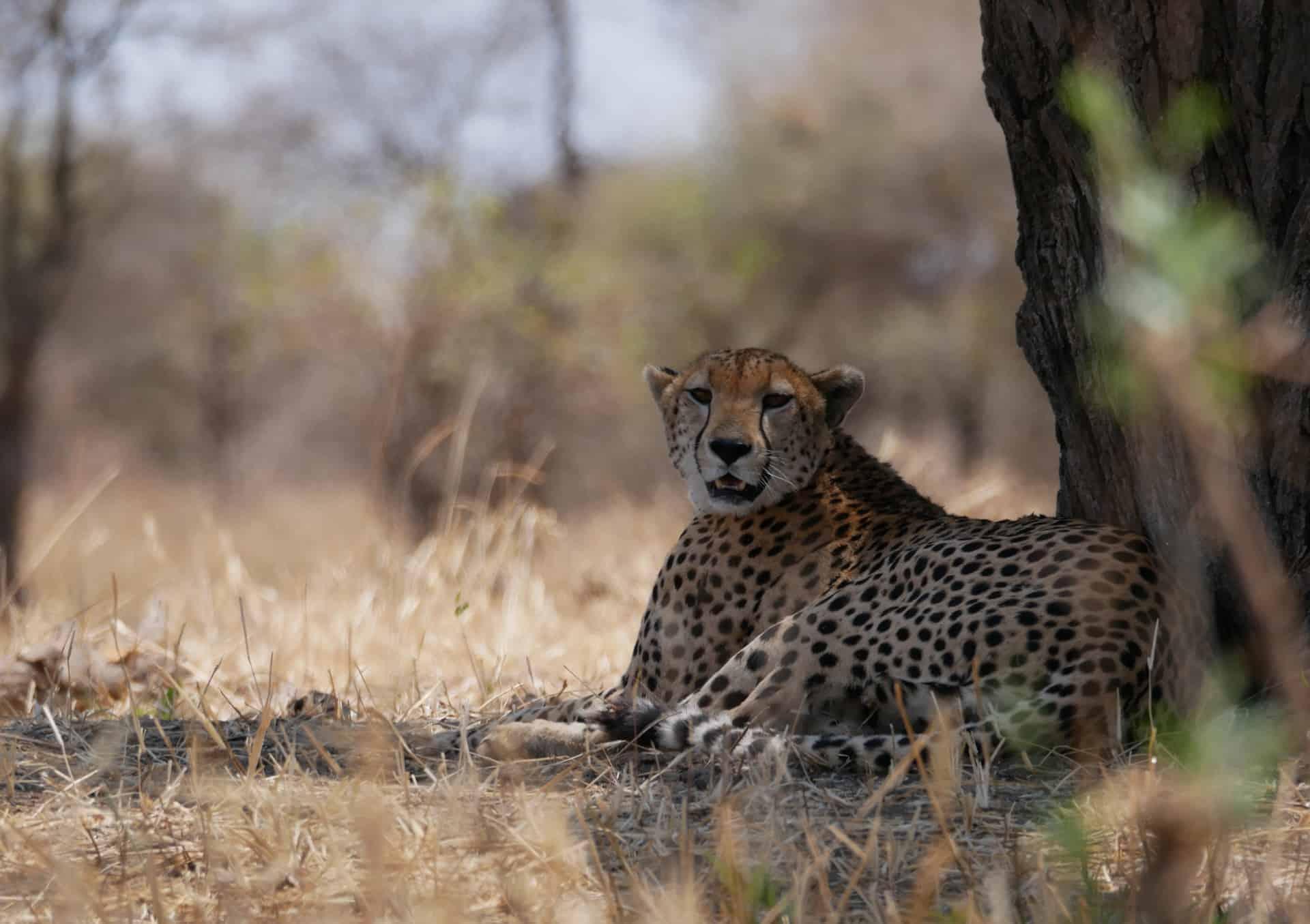 Good Safari artikel afbeelding